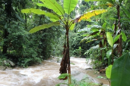 River in Khun Korn Forest